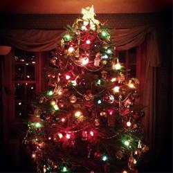 Christmas Tree © Amanda Kohn